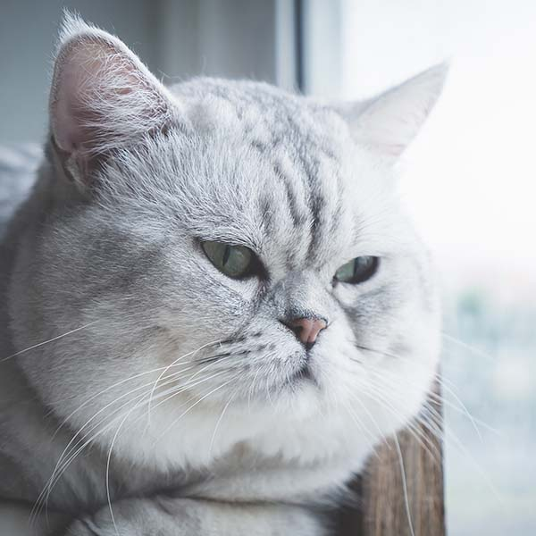 Unhappy cat looking outside