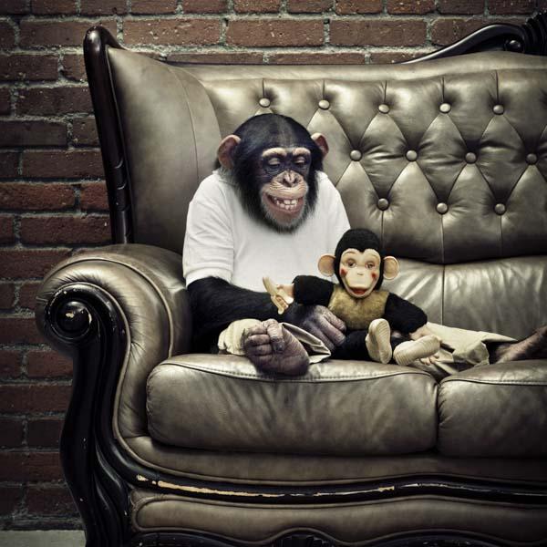 Monkey on couch holding little stuffed monkey
