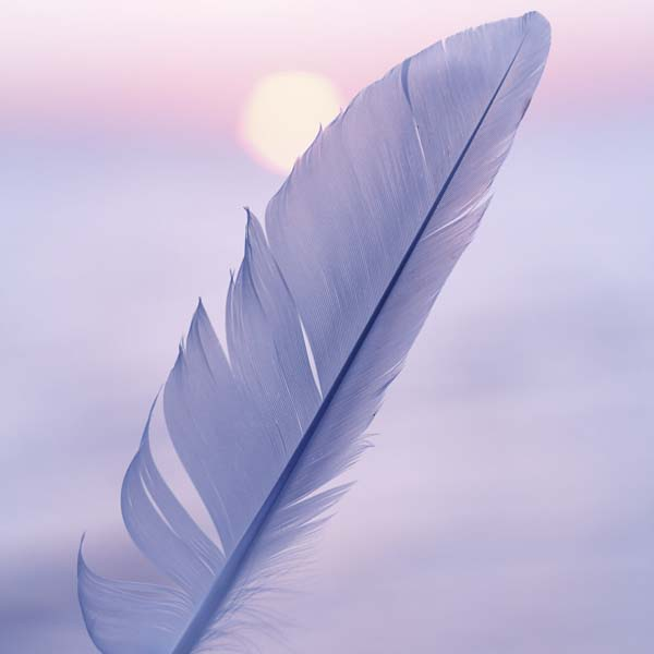 Feather at sunrise