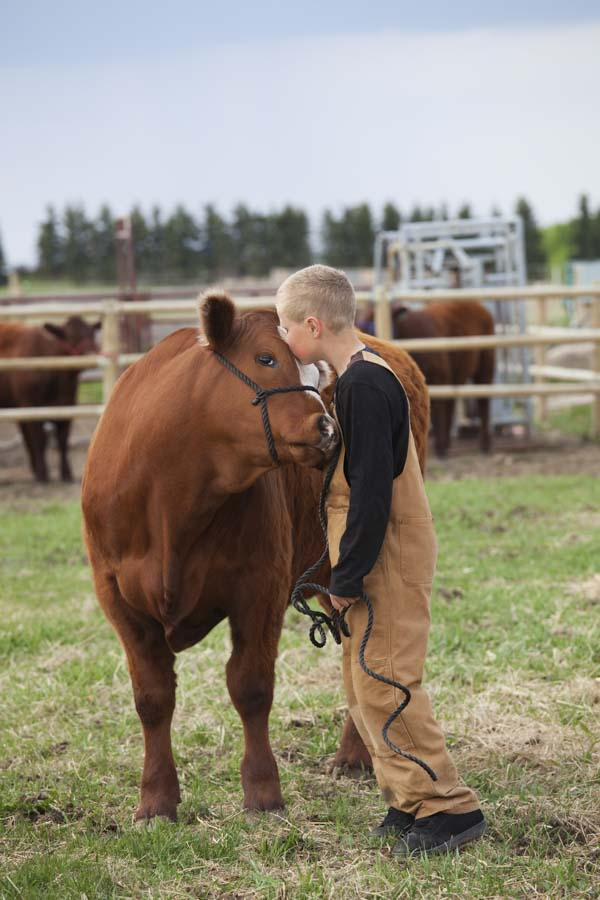 Sweet farmer boy kissing his cow on forehead