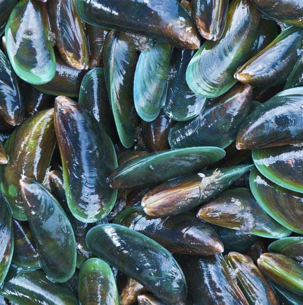 Gathering of muscles