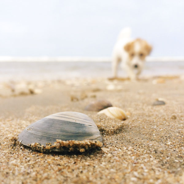 Dog following the shell signs