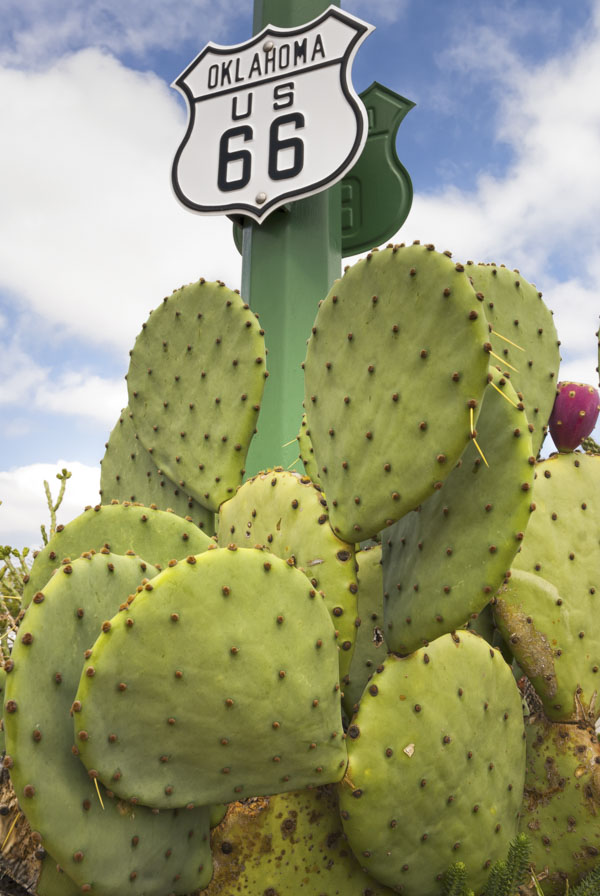 Cactus and Route 66 sign
