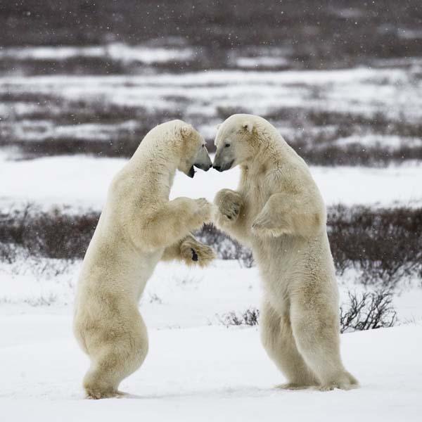 #spiritsays: Polar opposites