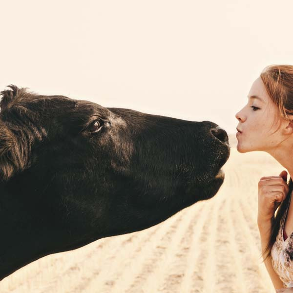 Cow and girl nose to nose