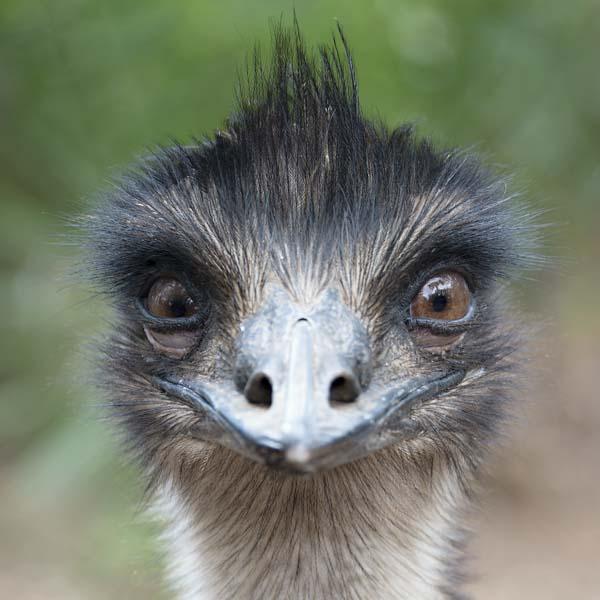 #spiritsays: Beaks that seek