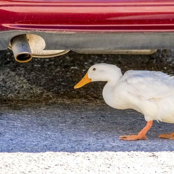 #spiritsays: Learn to duck