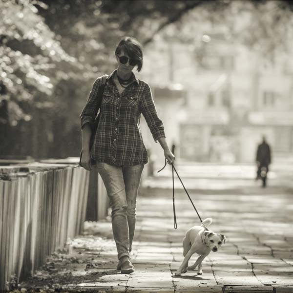 Dog leaning away from leash