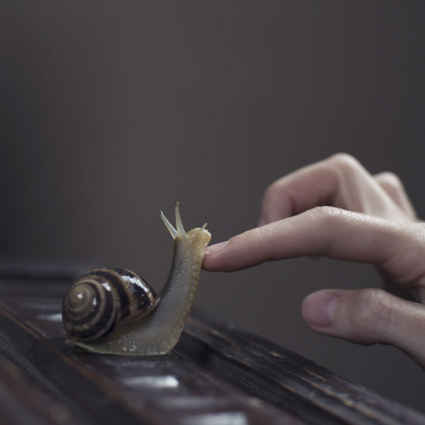 Snail having his chin rubbed