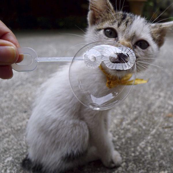 Cute kitten blowing soap bubbles