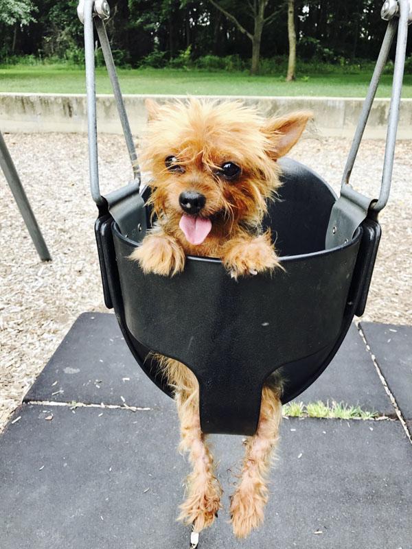 #spiritsays: Happy pup