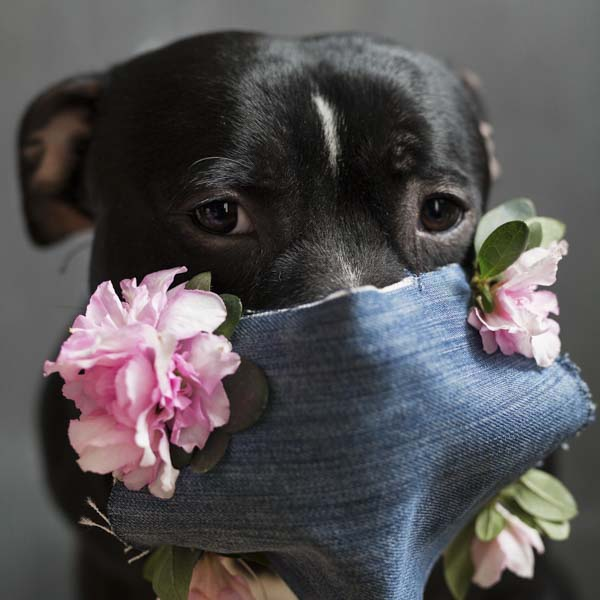 Beautiful dog in face mask