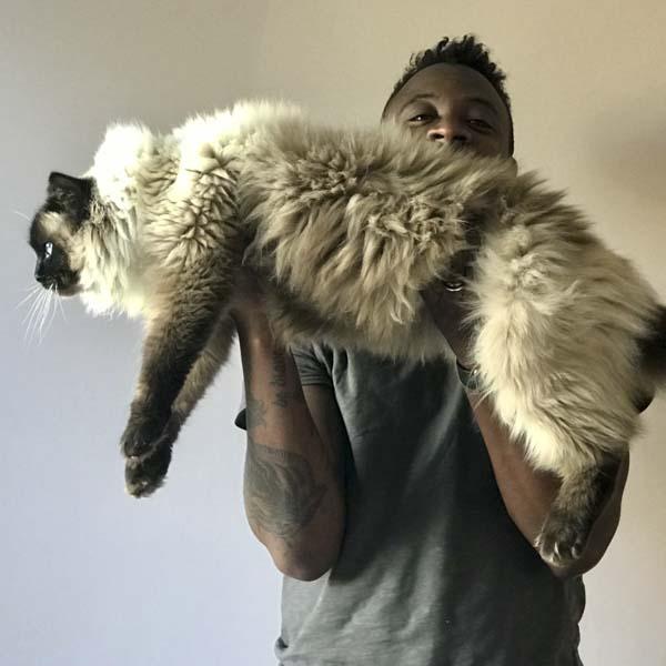 Man lifting extra large cat