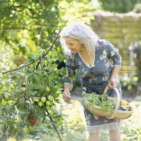 Woman picking plants from her garden