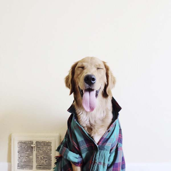 Smiling dog dressed in flannel shirt