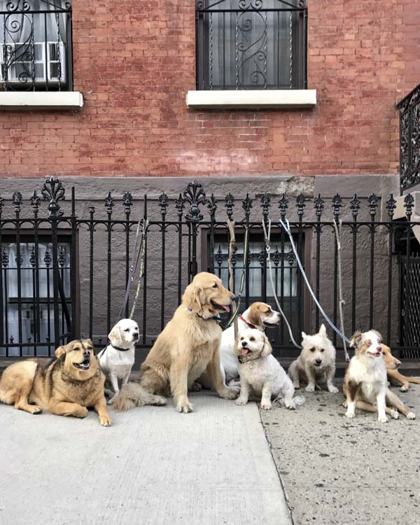 Group of dogs leashed to fence