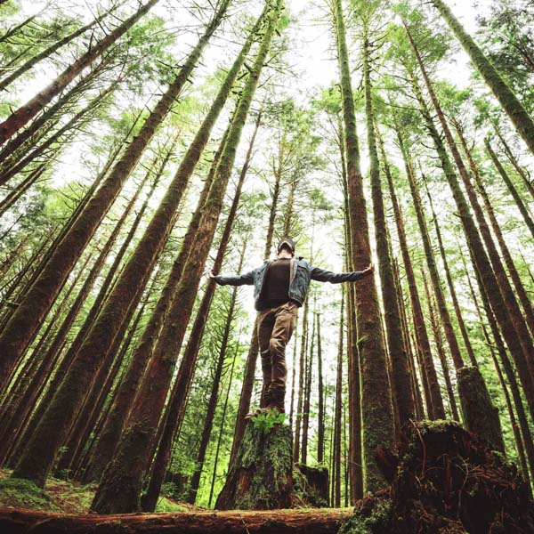 Man standing on stump in forest