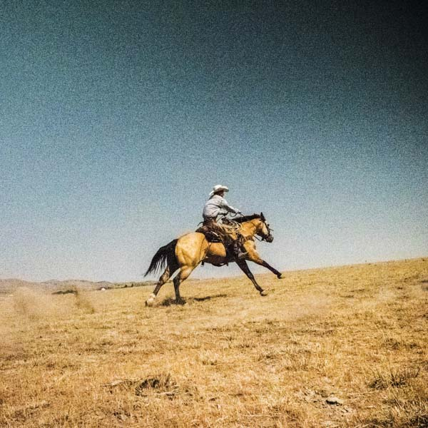 Horse racing up the hill