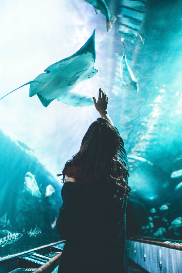 Woman reaching up to touch manta ray
