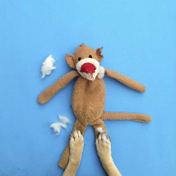 Dog with stuffed monkey