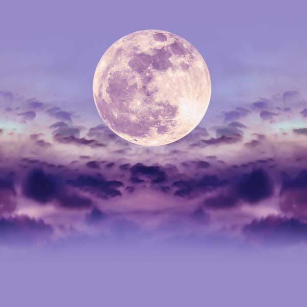 Lavender full moon