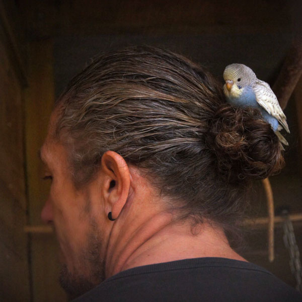 Man with parakeet in his hair