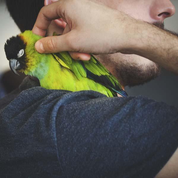 Man petting green bird