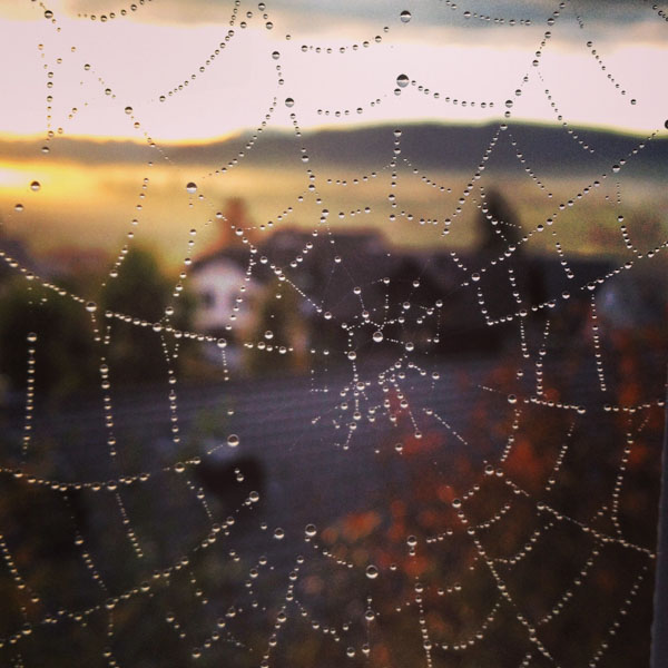 Spider web with heart center