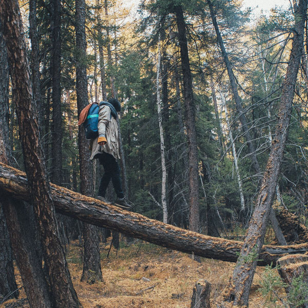 Woman with backpack walking on downed tree in forest