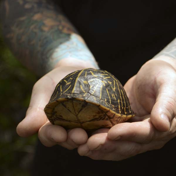 Man holding box turtle in shell