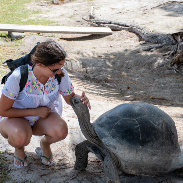 Woman petting old tortoise