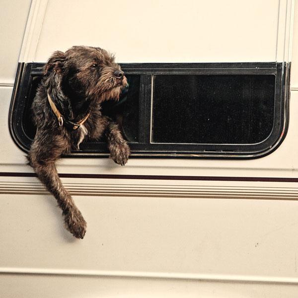 Old dog in motorhome