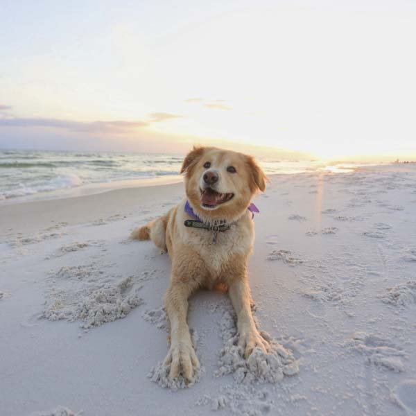 Happy dog with paws in the sand