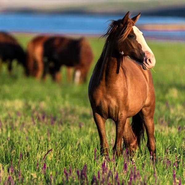 Beautiful horses in pasture