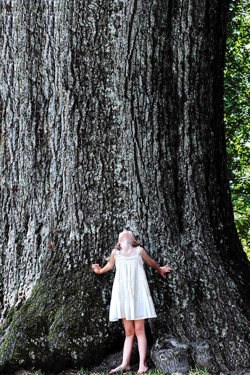 Girl looking up a giant tree