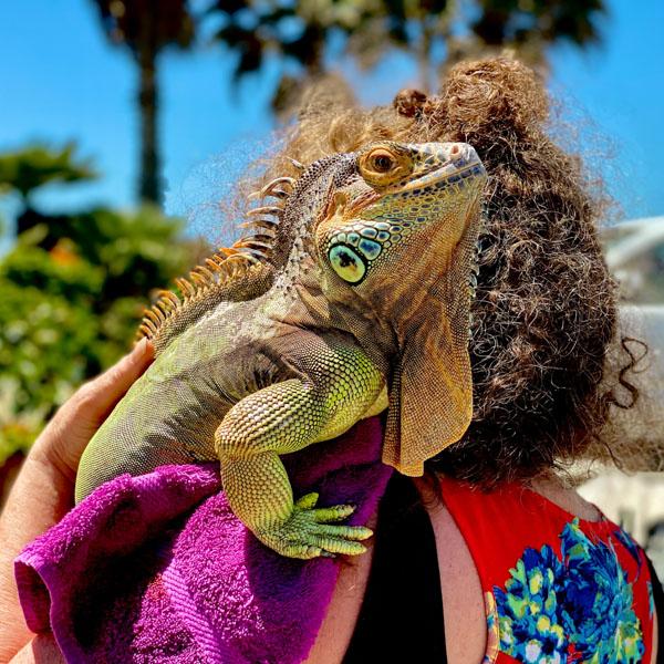Iguana on woman's shoulder