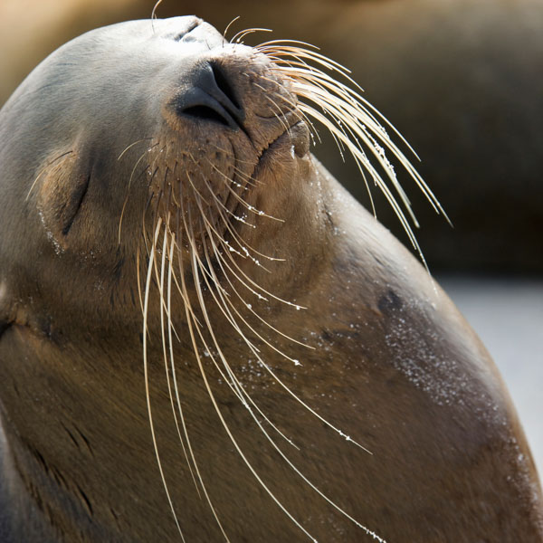 Sea lion in sunshine